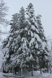 Foggy day in Winter season: Tree branches covered with snow Stock Photo