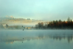 Foggy deer lake Royalty Free Stock Photos