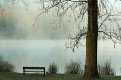 Foggy deer lake Royalty Free Stock Images