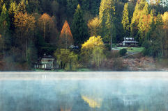 Foggy deer lake Stock Image