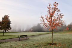 Foggy deer lake park in autumn Royalty Free Stock Image