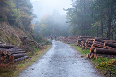 Foggy Deerpark and Djouce Woods, Ireland royalty free stock photos