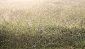 Foggy Dew Royalty Free Stock Images