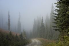 Foggy Dirt Road Stock Photo