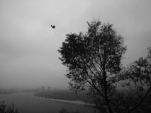 Foggy Dnepr. The photo shows a top view of the Dnieper, trees and birds in autumn foggy day stock images