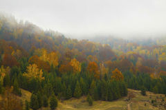 Foggy dramatic autumn colorful forest landscape Royalty Free Stock Photography