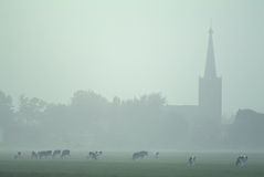 Foggy Dutch landscape with cows and a church Stock Photography