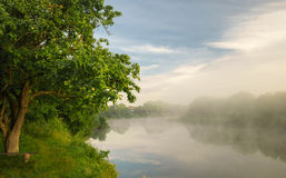 Foggy early morning.river bank Royalty Free Stock Photography