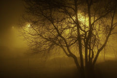 Foggy evening Stock Photography