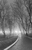 Foggy evening in the city park. Black and white. Royalty Free Stock Photography