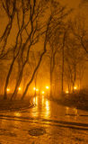 Foggy evening in the park Royalty Free Stock Images