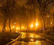 Foggy evening in the park Royalty Free Stock Photography