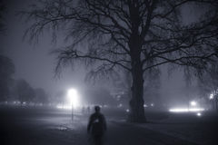 Foggy evening in the park Stock Photography