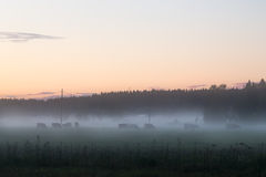 Foggy evening Royalty Free Stock Images