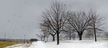 A foggy evening in winter Royalty Free Stock Photo