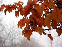 Foggy fall Royalty Free Stock Images