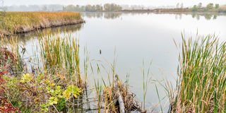 Foggy fall day in wetlands Stock Photo