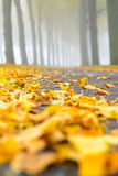 Foggy Fall. Focus on the fallen leaves on the ground during autumn Royalty Free Stock Image