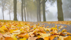Foggy Fall. Focus on the fallen leaves on the ground during autumn Stock Photography