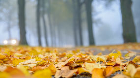 Foggy Fall. Focus on the fallen leaves on the ground during autumn Royalty Free Stock Photo