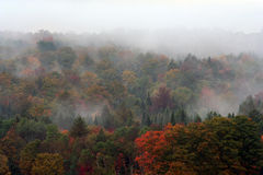 Foggy Fall Morning. Fall trees on hill in fog stock image