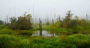 A foggy fall morning at Guste Island in South Louisiana Royalty Free Stock Photography