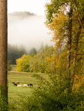 Foggy Fall Morning. A wonderful fall morning with low lying fog out in the country side Stock Image
