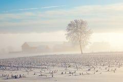 Foggy farm landscape. Farm in a misty wintry landscape Stock Images