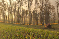 Foggy farmland in java Royalty Free Stock Photo