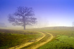 Foggy field Royalty Free Stock Image