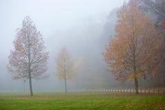 Foggy Field Stock Photos