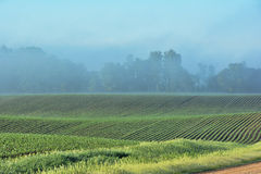 Foggy Field 2 Stock Photos