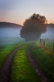 Foggy field Stock Images