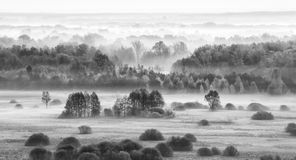 Foggy field in the morning - bw Stock Photography