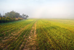 Foggy field at morning Royalty Free Stock Image