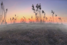 Foggy field of Russia Stock Photo