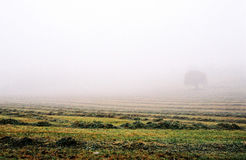 Foggy field. In Spain at the morning Royalty Free Stock Photography