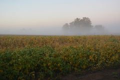 Foggy Field Sunrise Royalty Free Stock Image