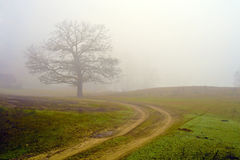 Foggy field of a tree. Stock Image