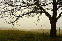 Foggy field of a tree. Royalty Free Stock Photo