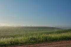 Foggy Field. A view of a very large farm field Royalty Free Stock Photos