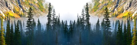 Foggy Valley Mist Misty with Pine Trees Forest in the Wilderness royalty free stock images
