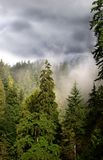 Foggy forest. Fog and storm clouds over a forest stock photo