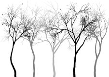 Foggy forest, royalty free illustration