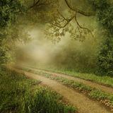 Foggy forest. With a country road Royalty Free Stock Photo