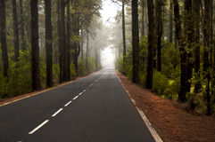 Foggy forest. Forest crossed by a road in fog Stock Photo