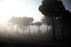 Foggy forest. Italian fog landscape in a winter day Stock Photo