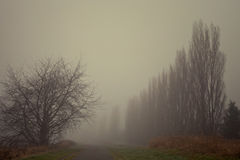 Foggy forest. Foggy path in forest at the morning royalty free stock images