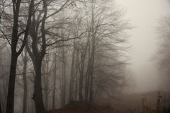 Foggy Forest Stock Image