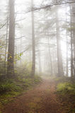 Foggy Forest. Royalty Free Stock Images